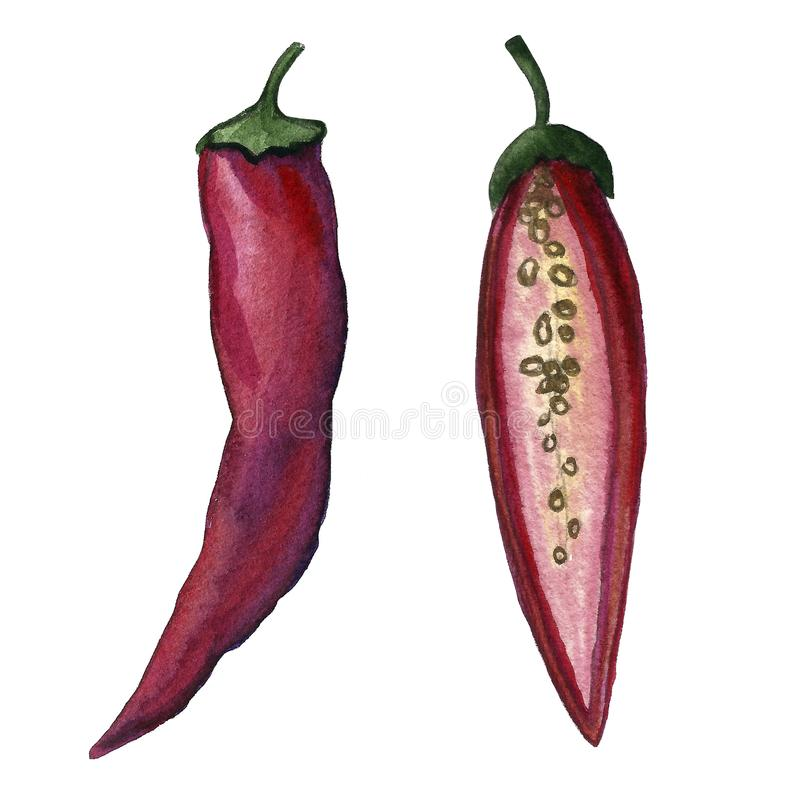Red hot chilli peppers set. Hand drawing watercolor. Can be used for postcards, stickers, encyclopedias, menus, ingredients of royalty free illustration