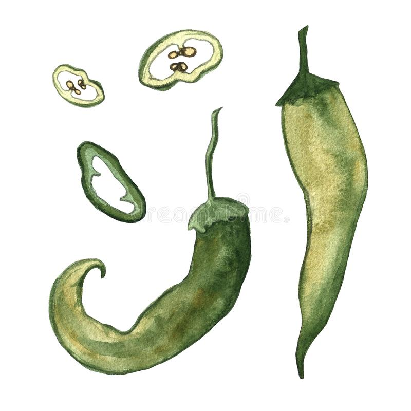 Red hot chilli peppers set. Hand drawing watercolor. Can be used for postcards, stickers, encyclopedias, menus, ingredients of stock illustration
