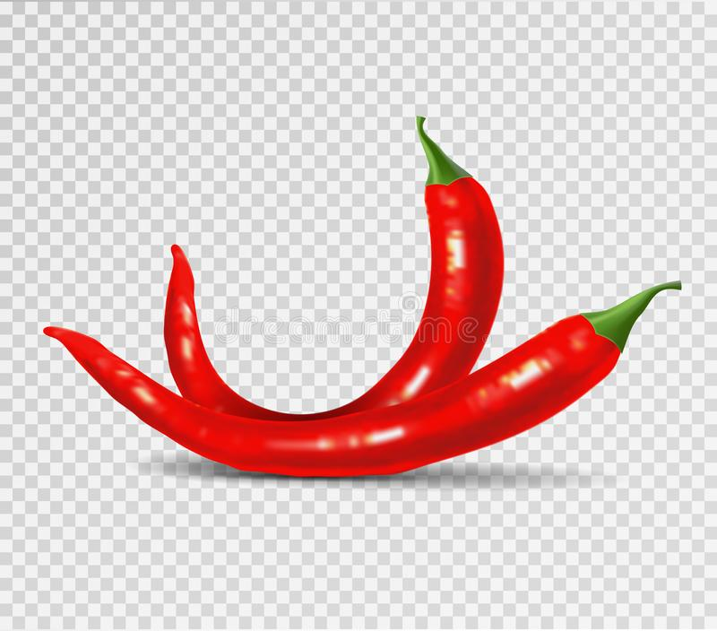 Red hot natural chili pepper pod realistic image with shadow vector illustration. vector illustration