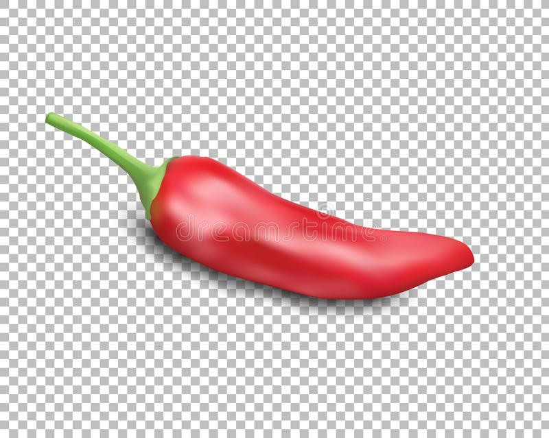 Red hot natural chili pepper pod realistic image with shadow vector illustration. royalty free illustration