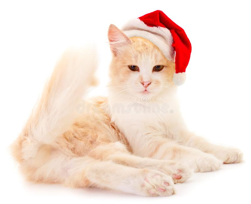 Red house cat in a red Santa Claus hat stock images