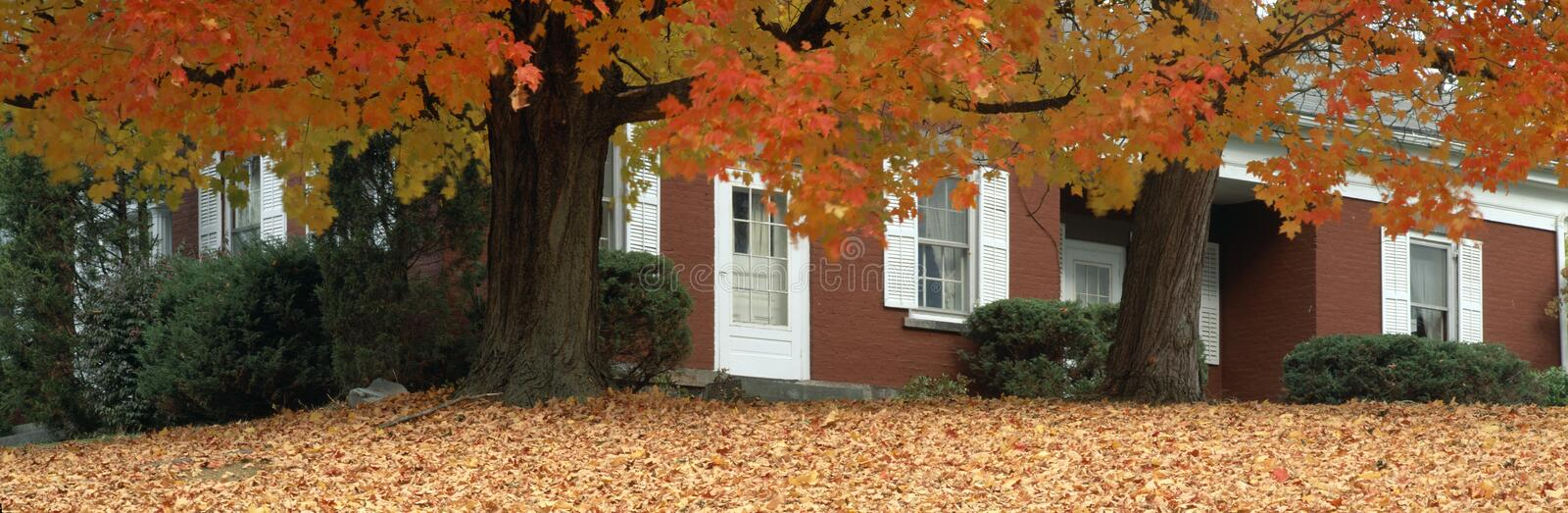 Red house and maple trees stock image