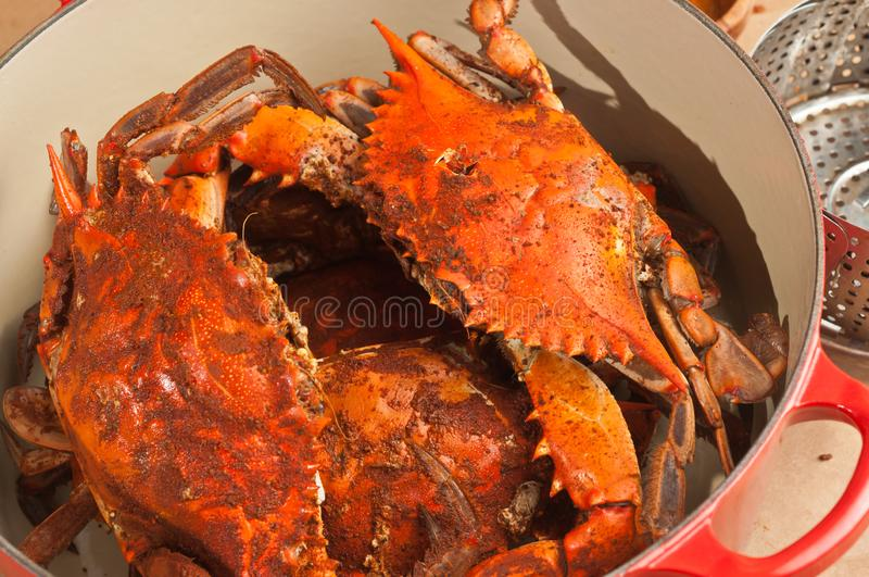 Red iron pot with three steamed blue claw crabs. Top view, close distance of red iron pot with three freshly caught, steamed, blue claw crabs with a covering of royalty free stock photography