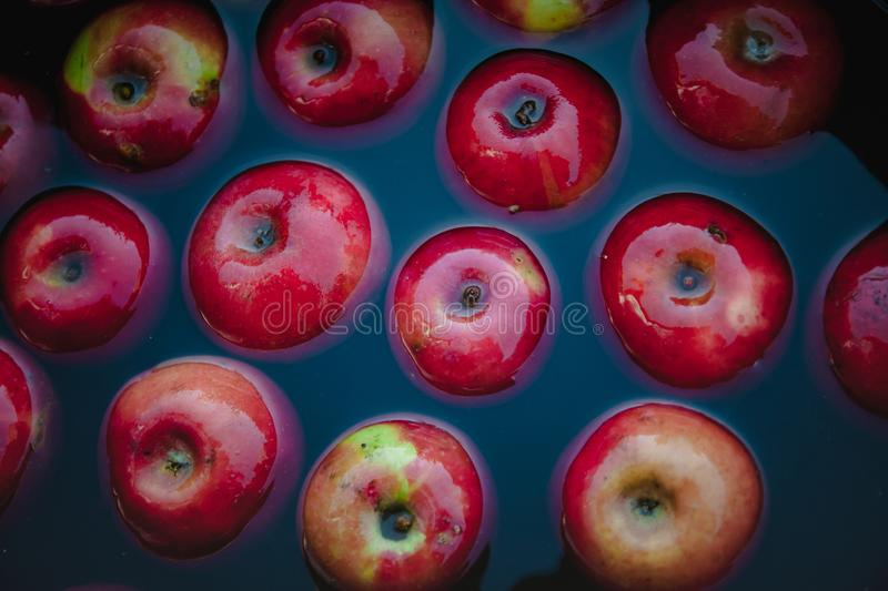 Red juicy apples in the water in a bucket. Trending dark retro background. Concept, rich harvest. Top view.  stock photography