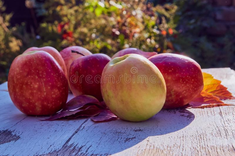 Red juicy ripe apples on an old wooden table on a background of autumn nature in the garden royalty free stock images