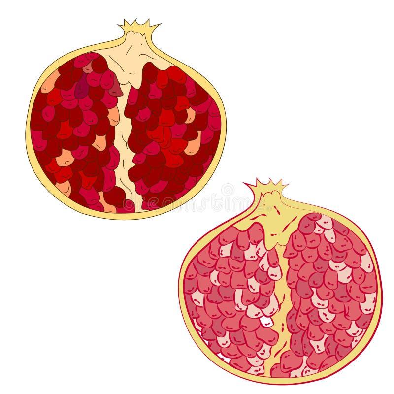 Red juicy ruby garnet. Fruits by season. Red juicy ruby garnet. Fruits by season vector illustration