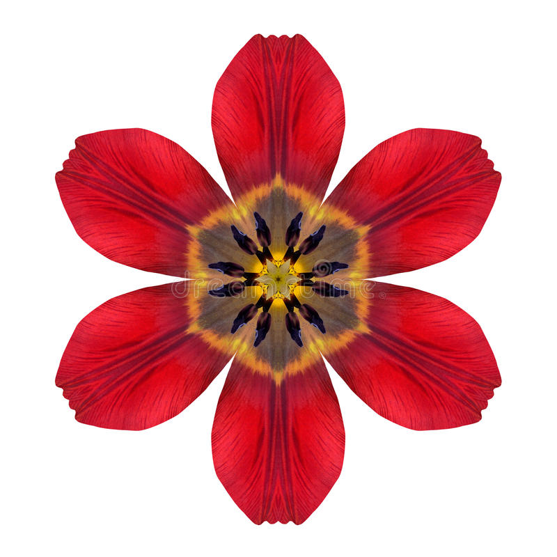 Red Kaleidoscopic Lily Flower Mandala Isolated on White. Background. Beautiful Natural Mirrored pattern royalty free stock images