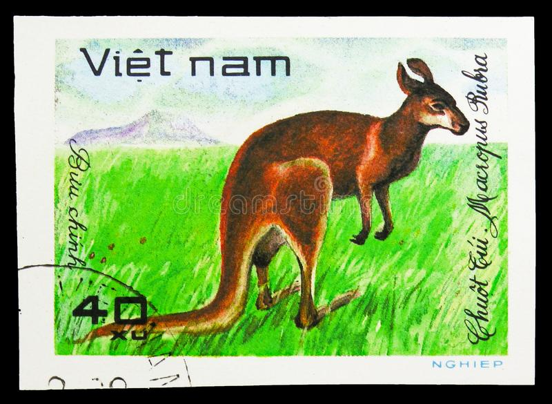 Red Kangaroo (Macropus rufus), World wild animals serie, circa 1981. MOSCOW, RUSSIA - SEPTEMBER 26, 2018: A stamp printed in Vietnam shows Red Kangaroo (Macropus royalty free stock images