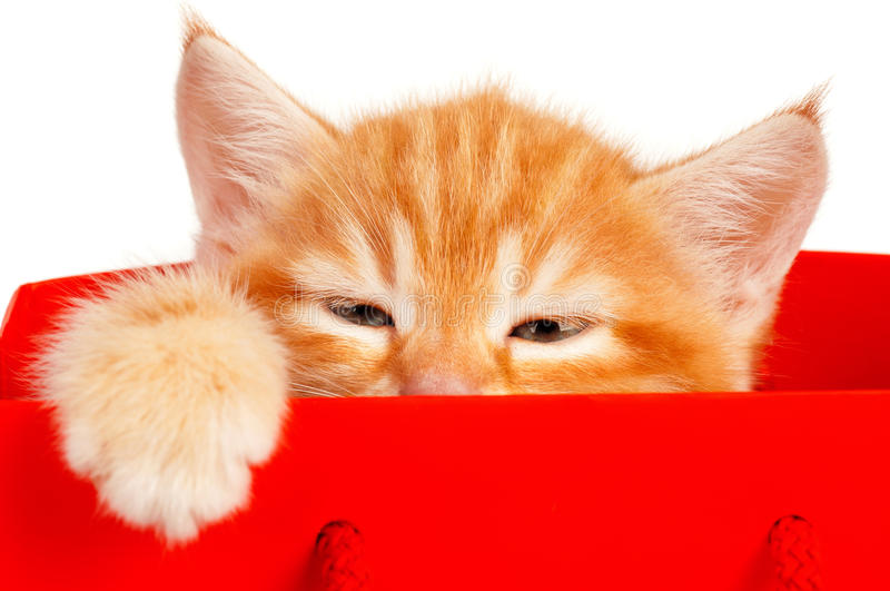 Download Red kitten stock image. Image of pretty, funny, cute - 26036627