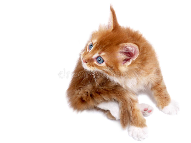 Download Red kitten stock image. Image of cute, looking, sweet - 9490871