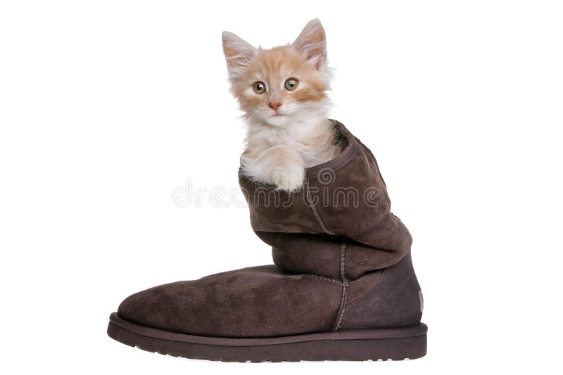 Download Red kitten in boot stock image. Image of hair, expression - 25709413