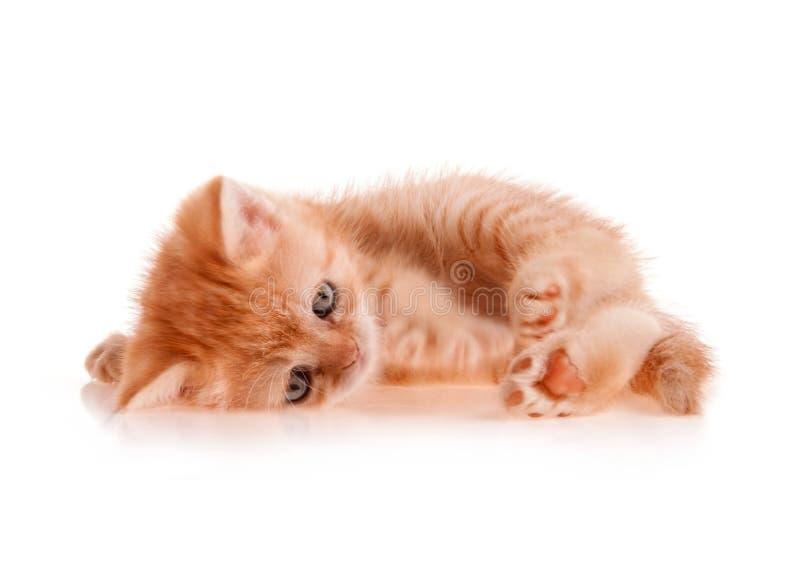 Red kitten lays