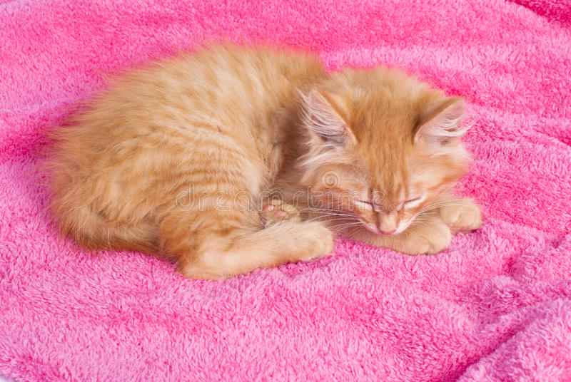 Download Red Kitten On The Pink Towel Stock Image - Image: 24585039