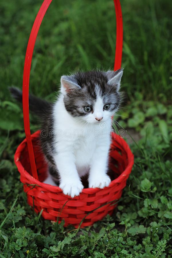Red kitty in the basket stock photos