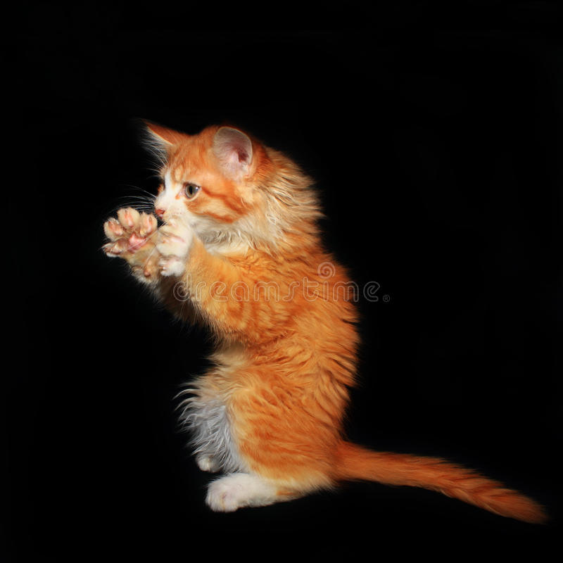 Free Red Kitty Scares Stock Image - 36155531
