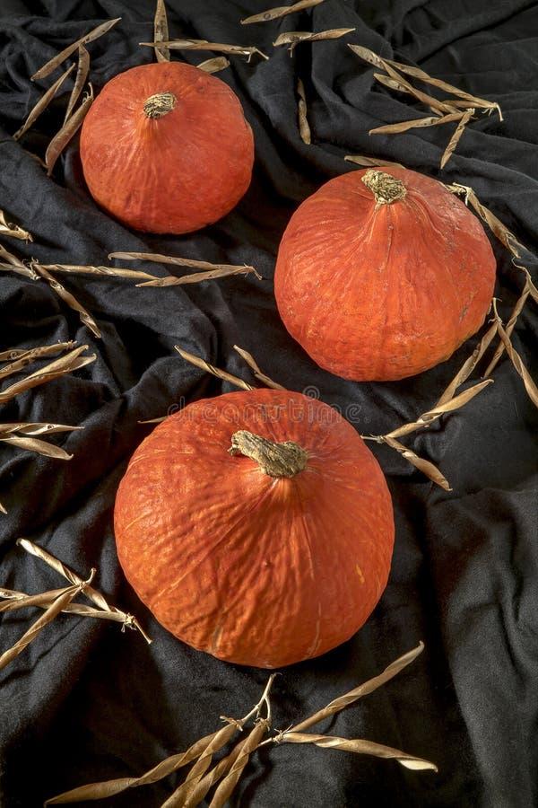 Red kuri squash, pumpkin royalty free stock image