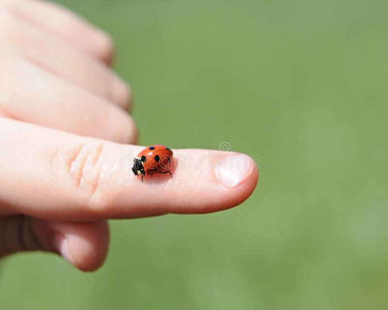 Download Red ladybug stock photo. Image of brave, legs, learning - 25510048
