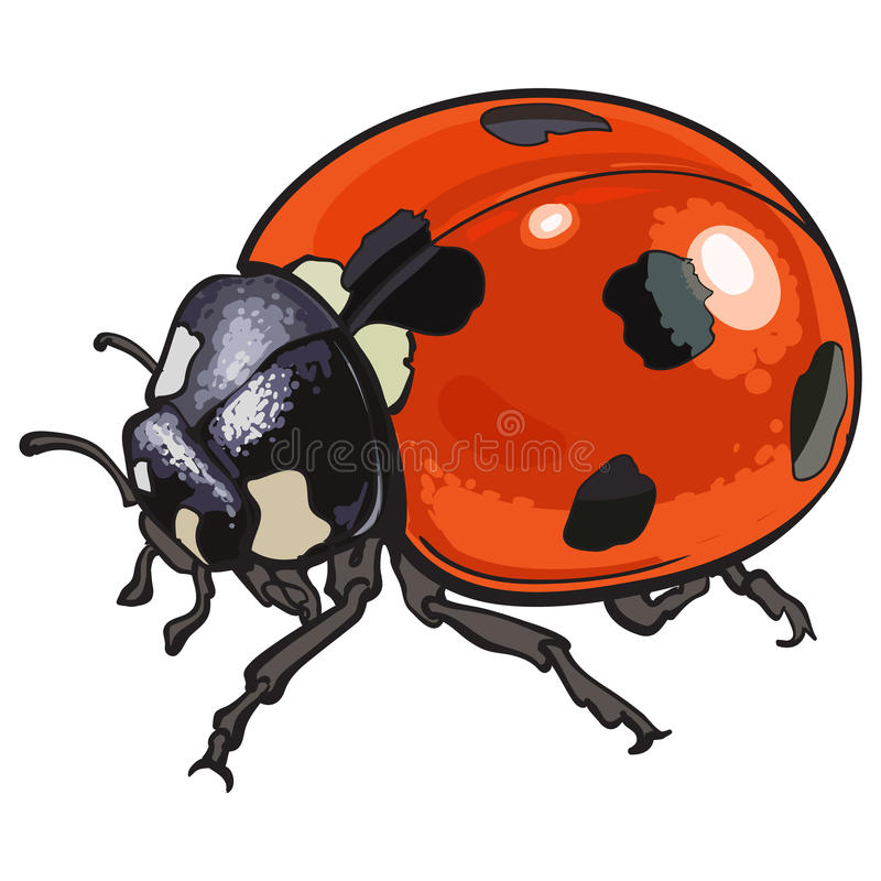 Realistic ladybug drawing - photo#35