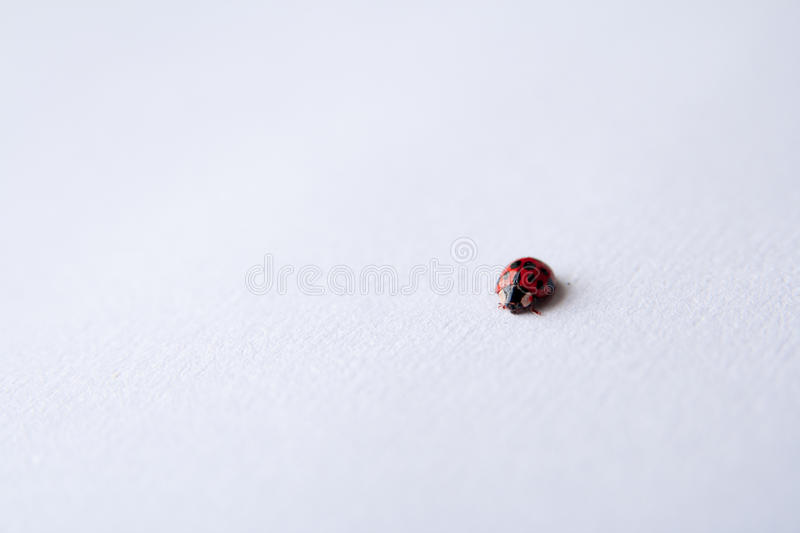 Red Ladybug On White Free Public Domain Cc0 Image