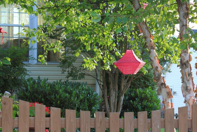 Red Lantern by White Birch Tree