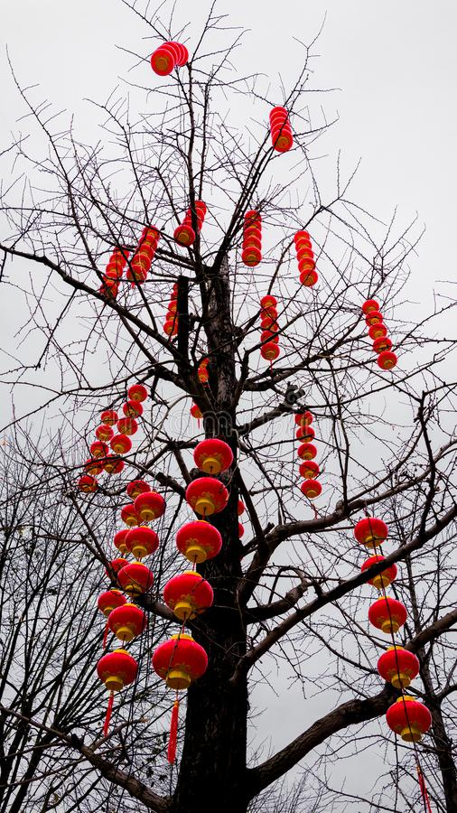 Red lanterns on a tree for Chinese New Year royalty free stock photo