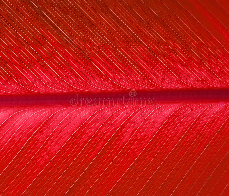 Download Red leaf stock photo. Image of leaves, biology, ecology - 17644208