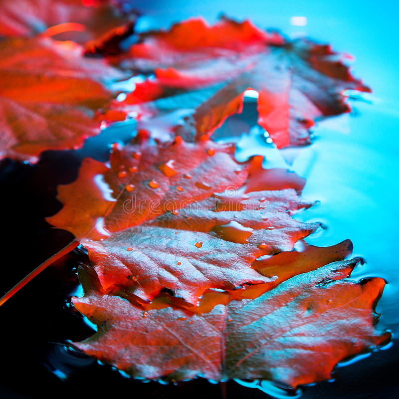 Download Red leaf stock photo. Image of bark, ship, yellow, wave - 26501108