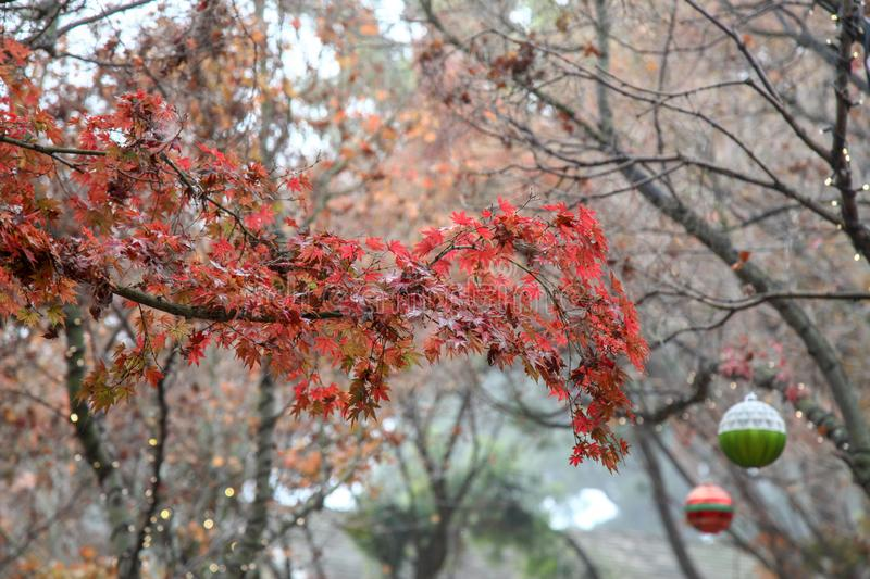Red leaf autumn in USA royalty free stock photos