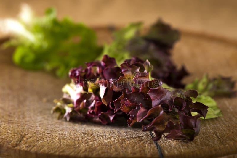 Red leaf coral lettuce. Over wooden timber stock image