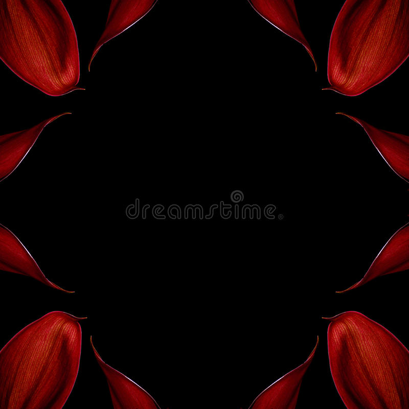 The red leaf decoration on a black background royalty free stock photography