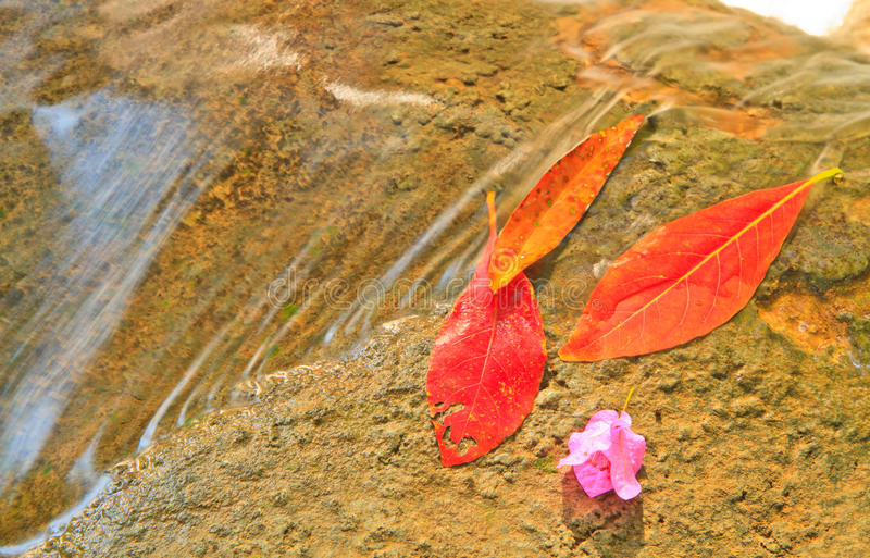 Download Red leaf stock image. Image of foliage, purity, stone - 33108649