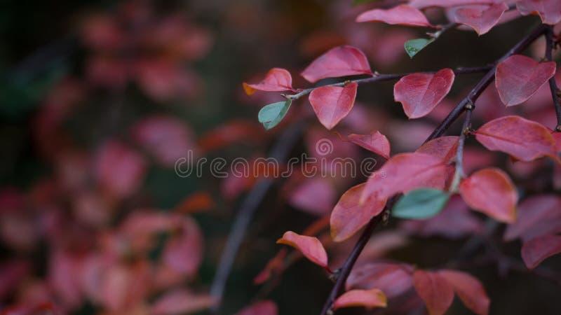 Red Leaf Plant Free Public Domain Cc0 Image