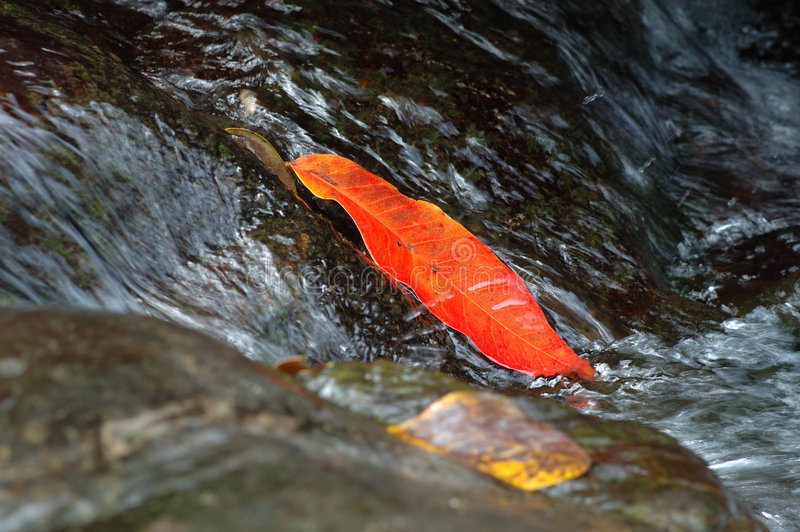 Red leaf in the rill stock image
