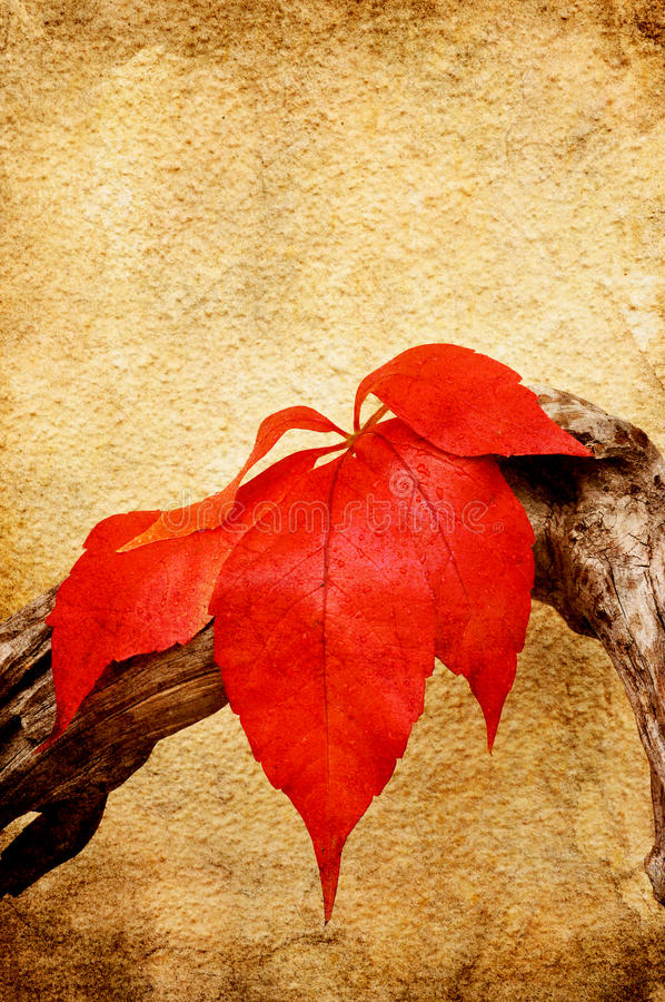 Download Red Leaf With Water Drops Stock Image - Image: 21535281