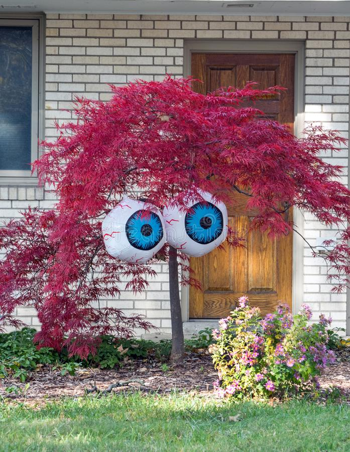 A red leafed Japanese maple tree sports a large pair of eyes for a funny Halloween decoration royalty free stock image