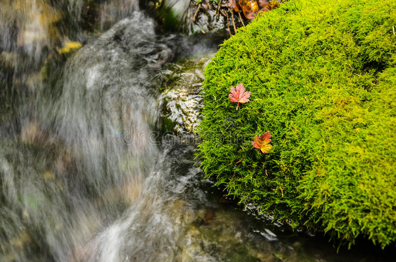 Download Red Leafs Resting On Moss Royalty Free Stock Photography - Image: 35824027