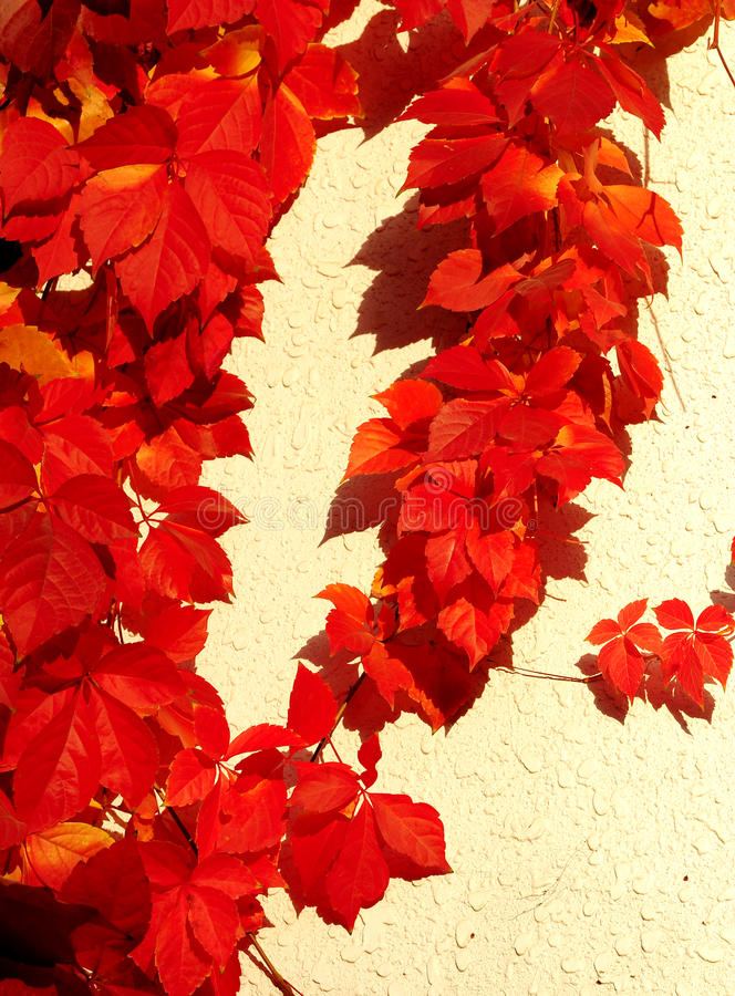 Red leaves royalty free illustration