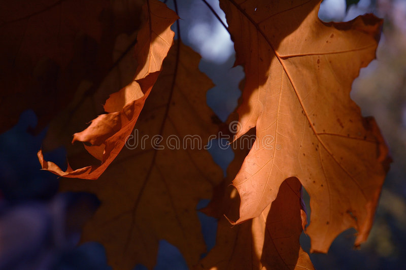 Download Red Leaves stock image. Image of leaves, seasonal, colors - 297939