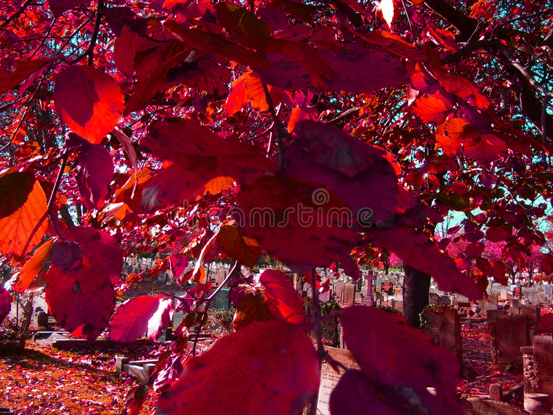Download Red Leaves stock image. Image of branches, barkinside, growth - 88375