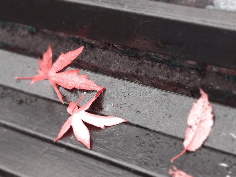 Red leaves on a bench in autumn stock photo