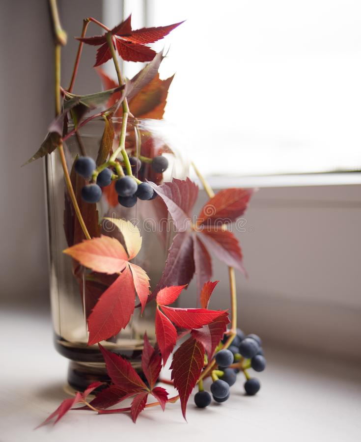 red leaves blue berries glass vase window close-up royalty free stock photo