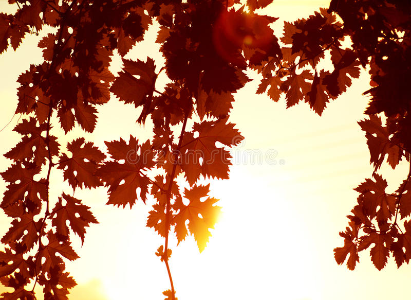 Red leaves border stock photography