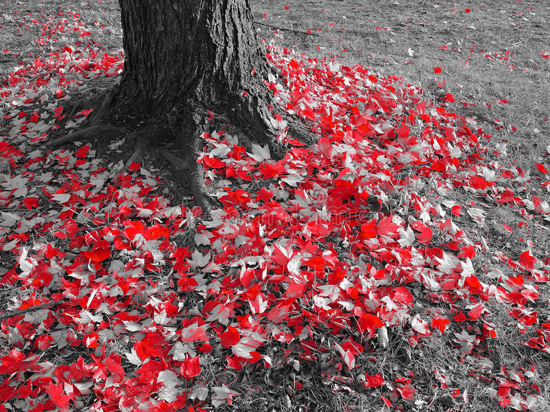 Download Red Leaves On The Ground Stock Photo - Image: 83711335