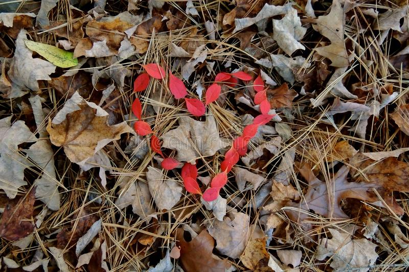 Red leaves heart shaped royalty free stock photos