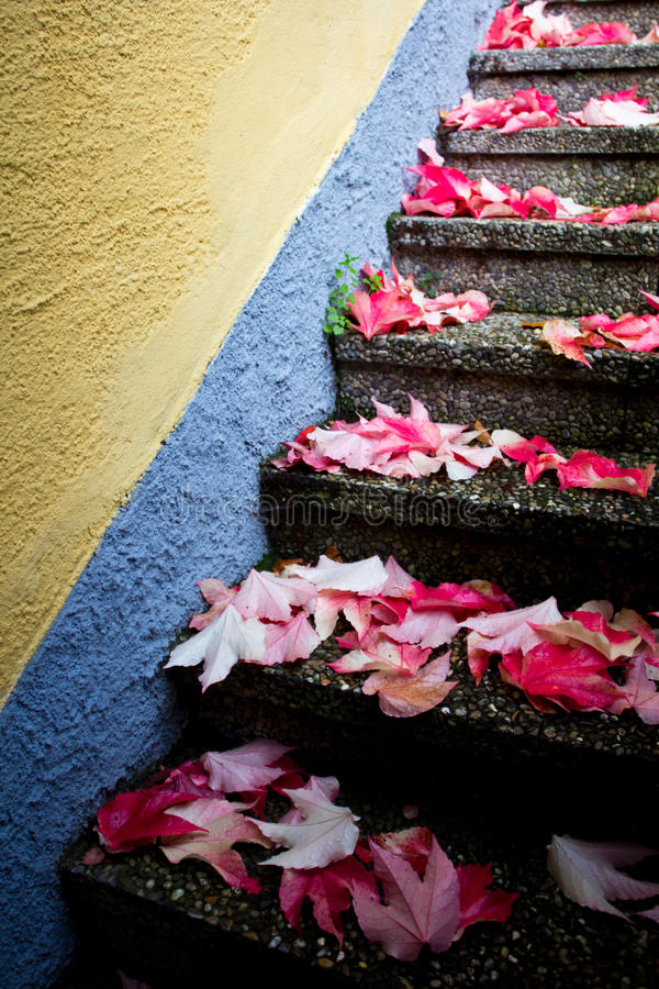 Free Red Leaves On Stairs Stock Image - 28921331