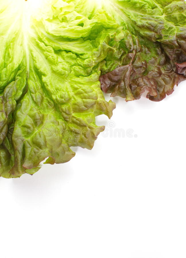 Download Red lettuce stock photo. Image of vegan, healthy, health - 32043598