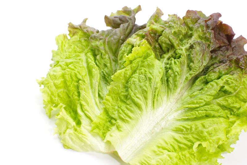 Download Red Lettuce Stock Image - Image: 32043621