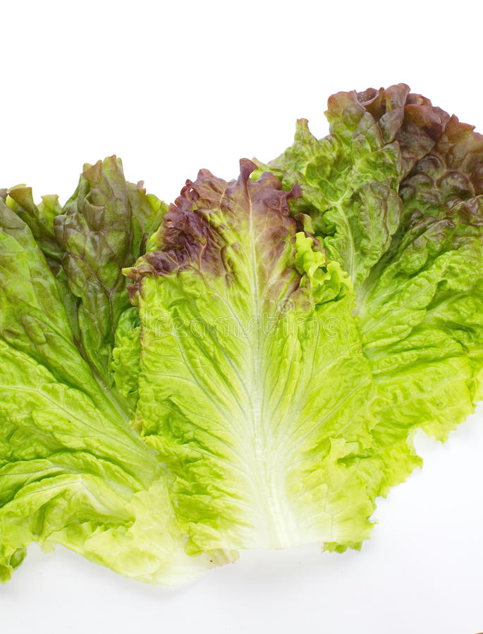 Download Red Lettuce Stock Photos - Image: 32043633