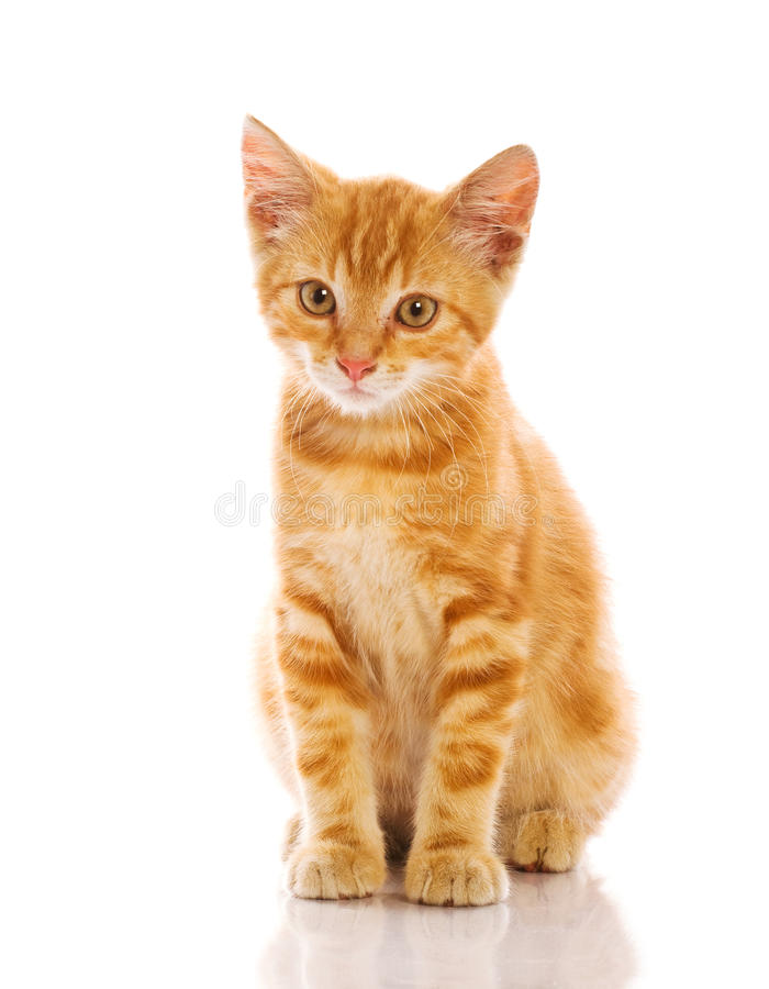 Free Red Little Cat Royalty Free Stock Photography - 20393937