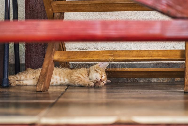 Red little kitten lying under the bench on a summer day.Cat under bench. Sleeping ginger cat in shadow of bench stock photo